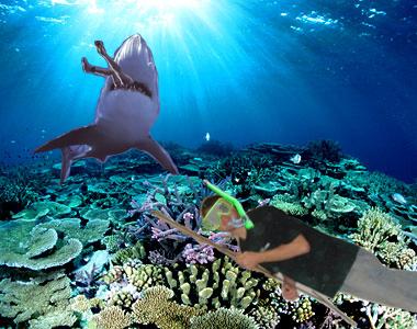Great Barrier Reef | The Philosophunculist